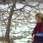 180 families to lose memorial trees planted at Des Moines Water Works Park