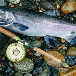 Another middling spring chinook return expected