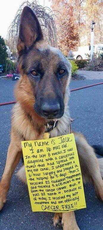 Jack the cancer free one eared good boy: https://t.co/qLEBAJcIFQ