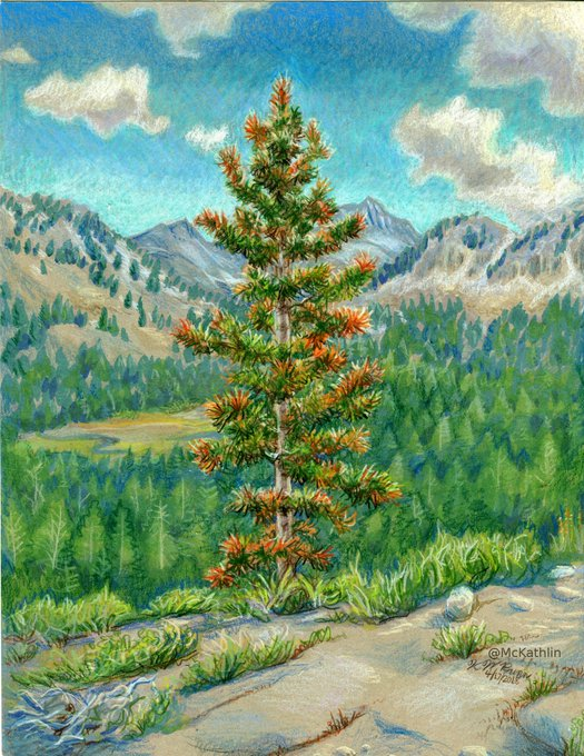 ""\""""Portrait of a Tree"""" for my favorite nature boy. Happy birthday!""525|680|?|en|2|4e8cab109071cd89273657dbb798072b|False|UNLIKELY|0.29863014817237854