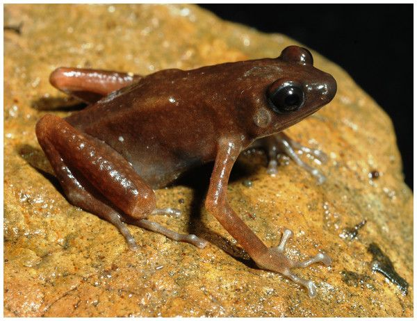 test Twitter Media - A striking new genus and species of cave-dwelling frog from Thailand https://t.co/WCJBCICUJU https://t.co/LC8vRpcPDG