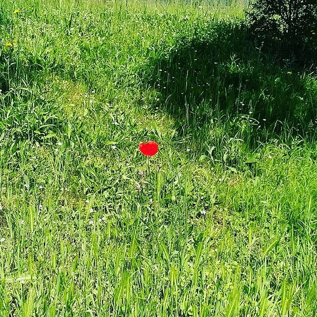 RT @gardeningloveuk: Reposting @lescreateursbio: #flowers #nature #picoftheday #red #Green #naturelover https://t.co/pmCXuP3uMW