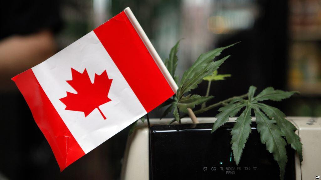 test Twitter Media - Canadá se prepara para venta legal demarihuana https://t.co/SakBeE6k0A https://t.co/FJTRsxtvGY