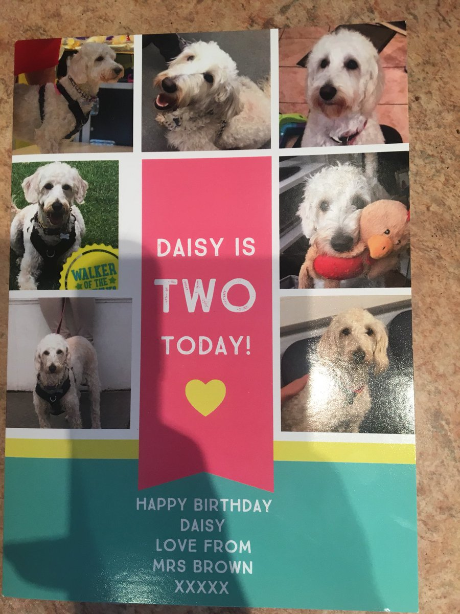 test Twitter Media - Thanks to all the generous parents for Daisy's birthday presents.😄😄@willowsvets @Myhappydoguk https://t.co/GpOMGhH3Nh
