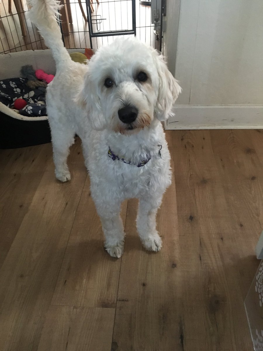 test Twitter Media - Daisy had her haircut ready for her holidays.@willowsvets @Myhappydoguk https://t.co/qMXFGRV7m6