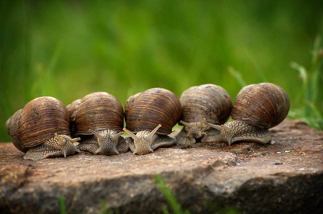 test Twitter Media - 'What lonely snails can tell us about the effects of stress on memory' article by Sarah Dalesman @Snail_memory in @ConversationUK on her recent #PhilTransB paper https://t.co/gMBljHAFmd https://t.co/wvg5f7auJn