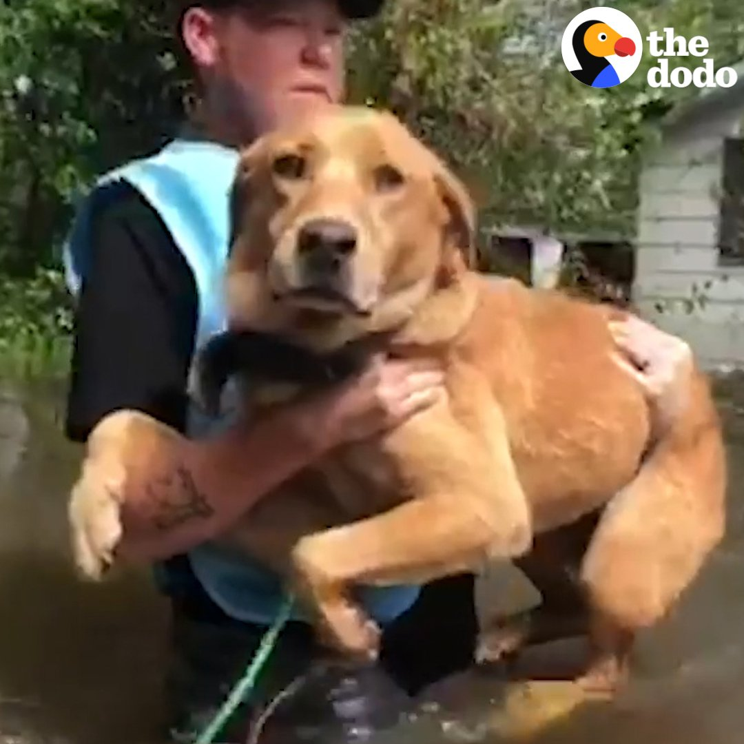 RT @dodo: These heroes rushed in to save the dogs who were left alone in the hurricane ❤️ (via @peta + @ruptly) https://t.co/Ano8QkU3IL