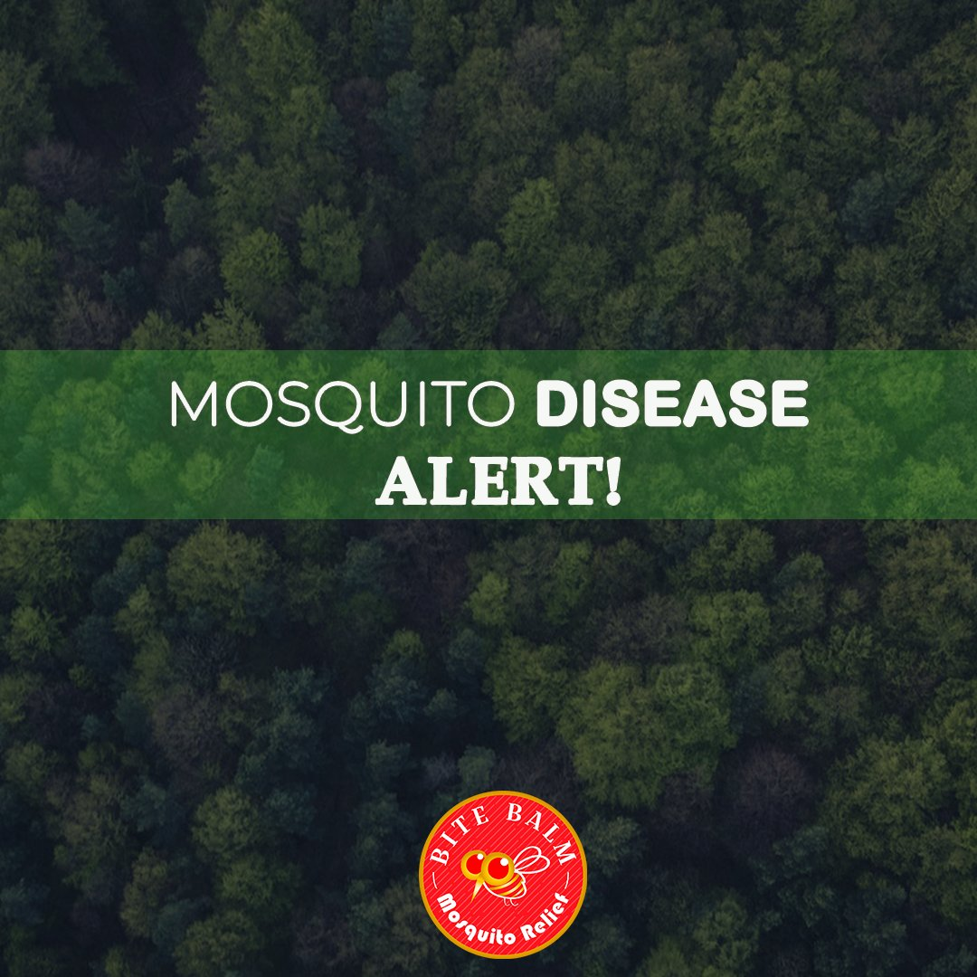 test Twitter Media - Important Information:  Mosquitoes are one of the deadliest creatures in the world because of the many diseases they can transmit. Mosquito diseases include the Zika virus, dengue, malaria, chikungunya, yellow fever and more.  -   #ointment #bitebalm #mosquitodiseases - 💊😨🆘 https://t.co/22oXM7kNzw