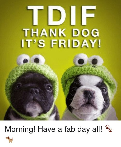 TDIF!! #fridayfeeling #vieravet https://t.co/o6zsWqc8KH