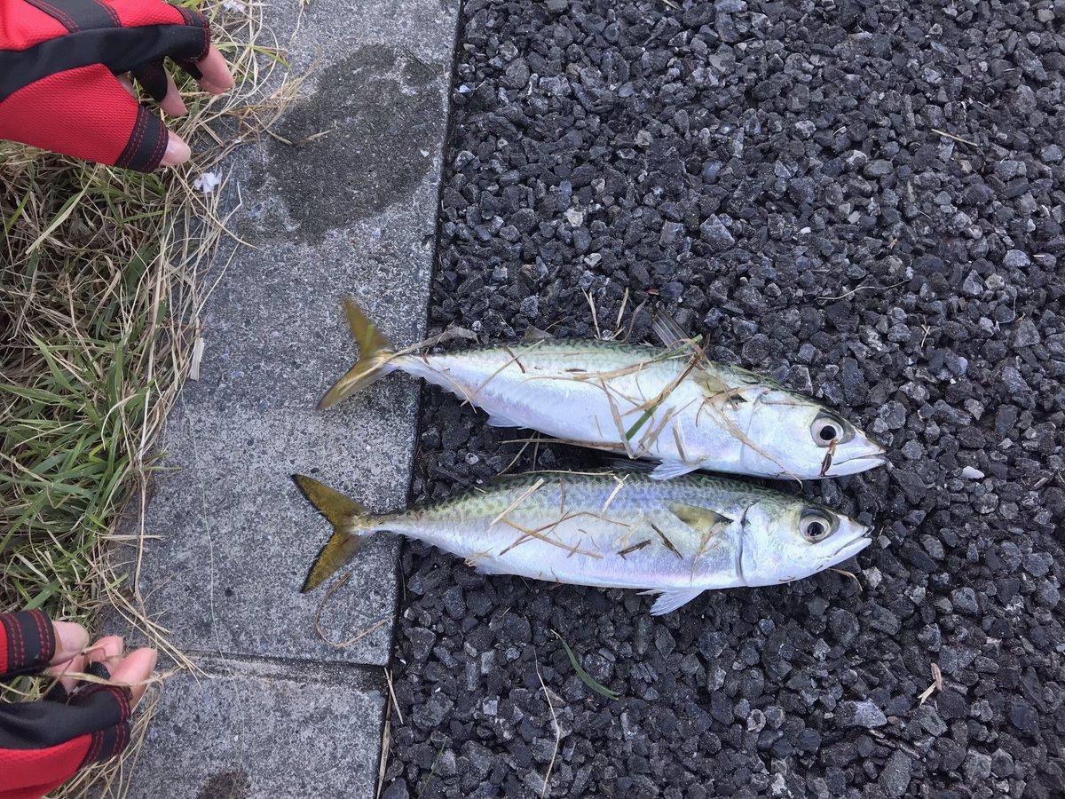主に海釣りを主体に、渓流など釣り全般やります! 釣り好きの方は是非仲良くして頂けると嬉しいです✨ #釣り好き  #釣り好きさんと繋がりたい https://t.co/gj0L30Grm3