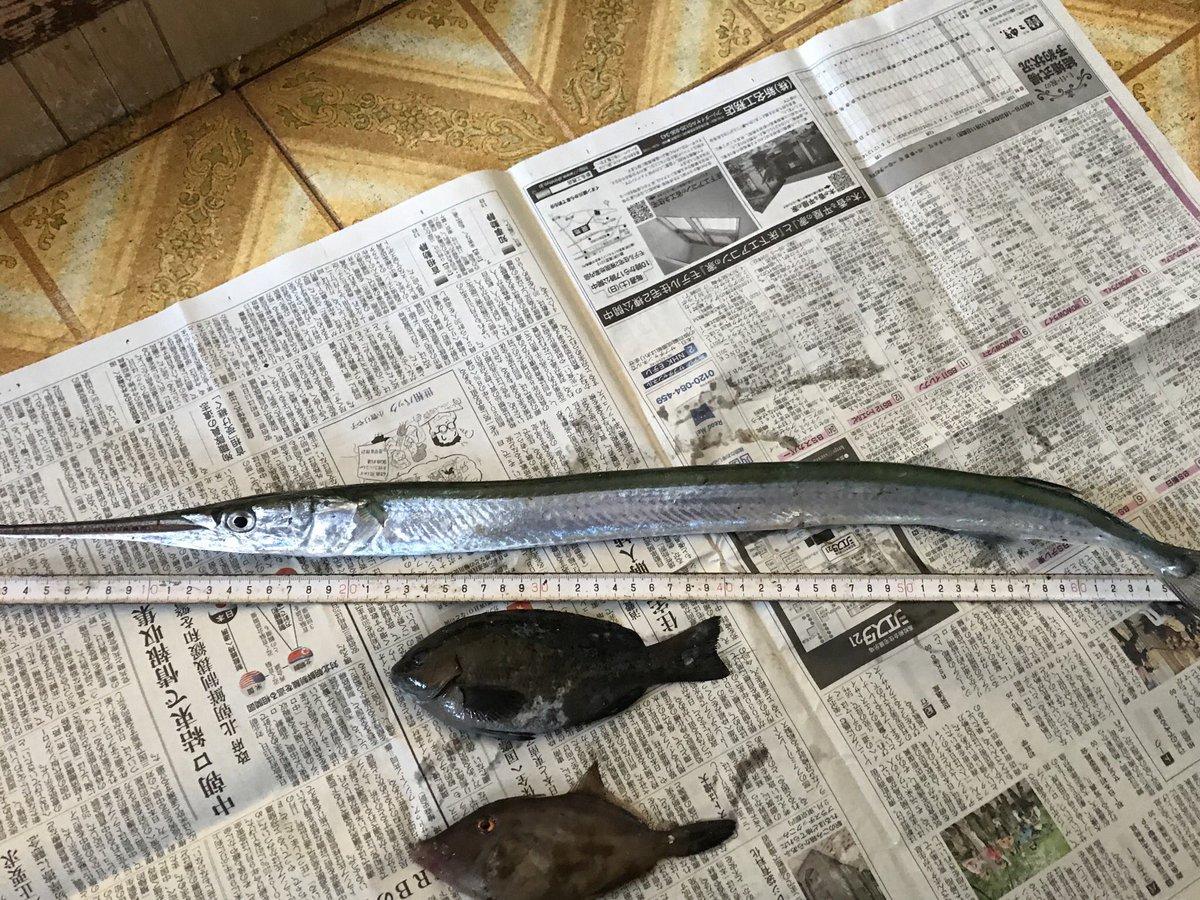三本松の釣果 ダツ ワインド  以下サビキ  メジナ ウマズラハギ  スズメダイ メジナ合わせて30以上 痛んだやつだけ持って帰って後はリリース  目当てのアジと太刀魚には会えませんでした https://t.co/zFGAAVS7Mn