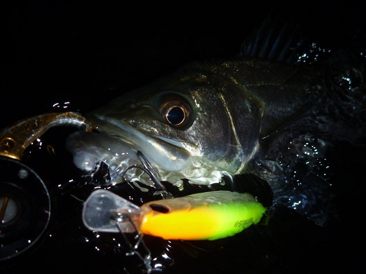 この時期にまだ釣れるだけいいっか♪ #LONGIN #ハイスタンダード #レビン #ロンジン #シーバス https://t.co/KaSPHPYV0Q