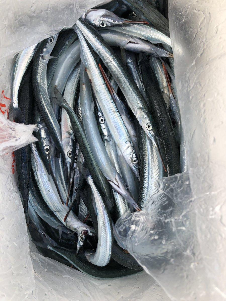 12月14日の釣果です。 四日市市  纐纈 様 サヨリ  28〜36㎝  70匹 エサ  サシアミ https://t.co/V6PC0dFUFq