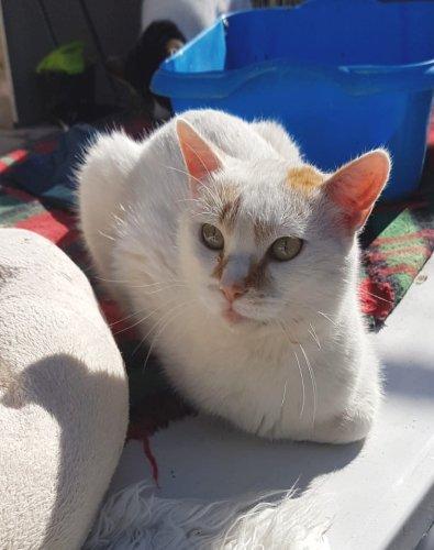 😍JERRY😍🐾💕🐱🐈#AdoptMe   https://t.co/PtvYmv3zAN  #AdoptDontShop #adoptcats #catsofspain #ataxiecats #CatsOfTwitter...