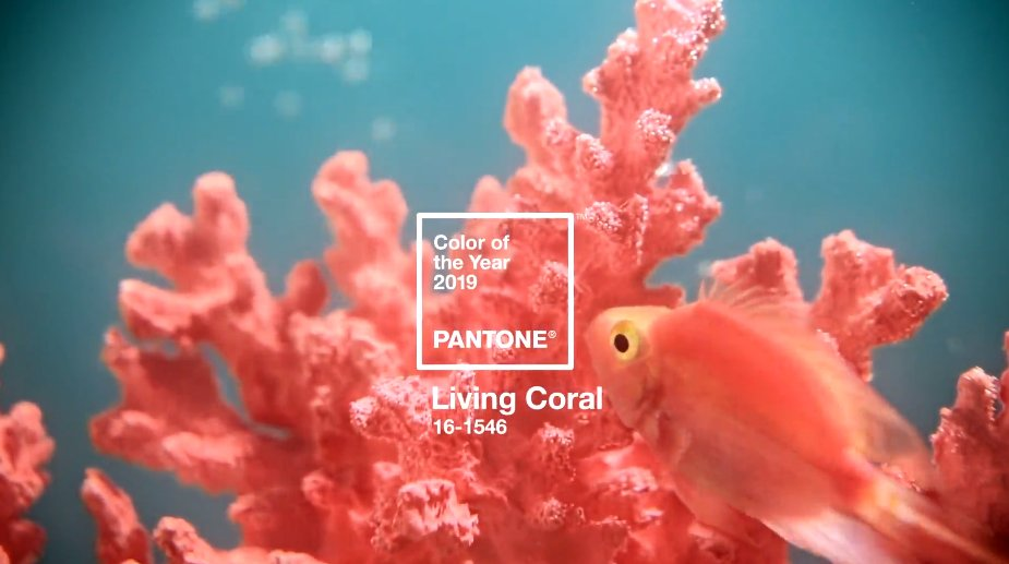 test Twitter Media - Designers note... the @Pantone 2019 Colour of the Year is... inspired by Earth's beautiful oceans: https://t.co/8Lf7kSCyVz https://t.co/TUM6gy3gxa