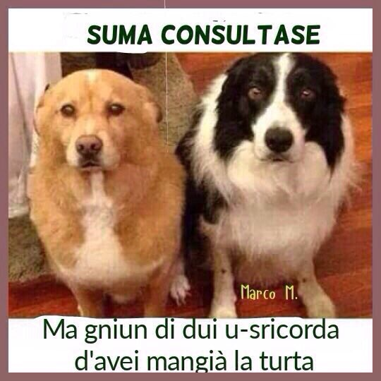 #valentinorossi