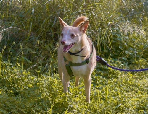😍🥰ELFO #Adoptme  https://t.co/puxGpKYlZw  #adoptdogs #dogsoftwitter #dogsarejoy #dogsneedhome #AdoptDontShop https://t.co/752TKnUTxd