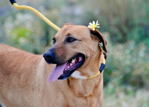 😍GOMINOLA 🥰 #AdoptMe  https://t.co/AhpRZ4w5tB  #adoptdogs #AdoptDontShop #dogsoftwitter #dogsneedhome #dogsarefamily https://t.co/8kwe5fSNa7