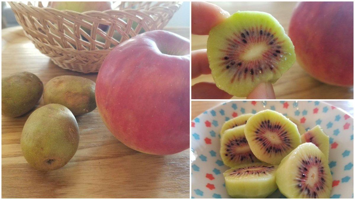 test ツイッターメディア - らでぃっしゅぼーやから また変わった果物が😲  キウイ…にしては随分小ぶり…🥝  と思ったら、中は赤色👀‼️  『レインボーレッドキウイ』  という品種らしい。  なんとも珍しい🥰 https://t.co/TLD1i9bk11