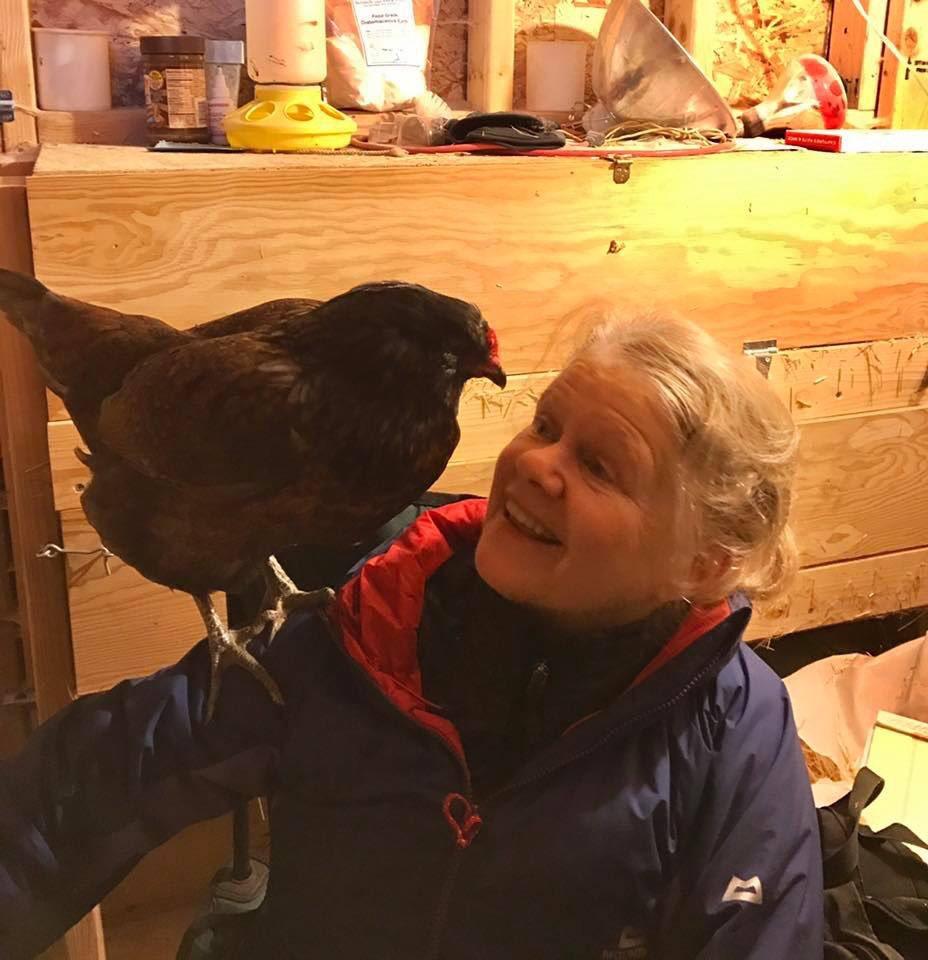 test Twitter Media - Who else has trained a chicken? This is Klara Kluck.#animaltraining,#positivetraining, #karenpryor https://t.co/Ol0vQRhF2z