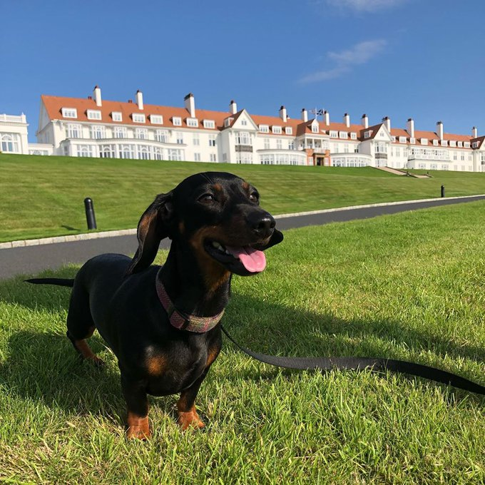 Can't leave home without your four-legged friend? With our #TrumpPets program, you don't have to! @TrumpHotels @TrumpTurnberry