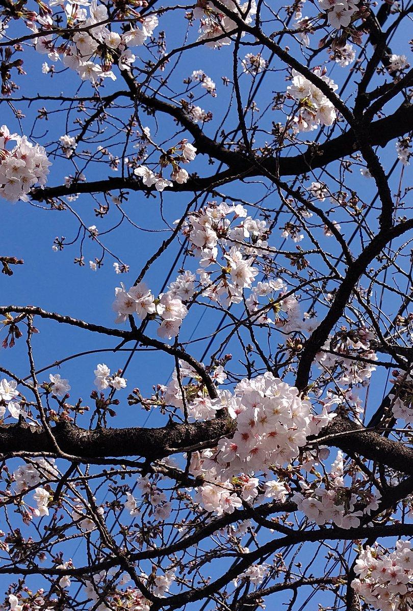 test ツイッターメディア - 昨日、最寄り駅から ひと駅散策しながら お花見🌸を、空を見上げると、 青空が広がり、色々な花が咲き ボゴム君の歌声が 心地よくて🎶🎹💞  パク・ボゴム 1stアルバム #bluebird 💙 好評発売中 💠🕊 ♬空を見上げてごらん Dear My Friend  #パクボゴム #박보검 #ParkBoGum https://t.co/Na1BCXGBcS