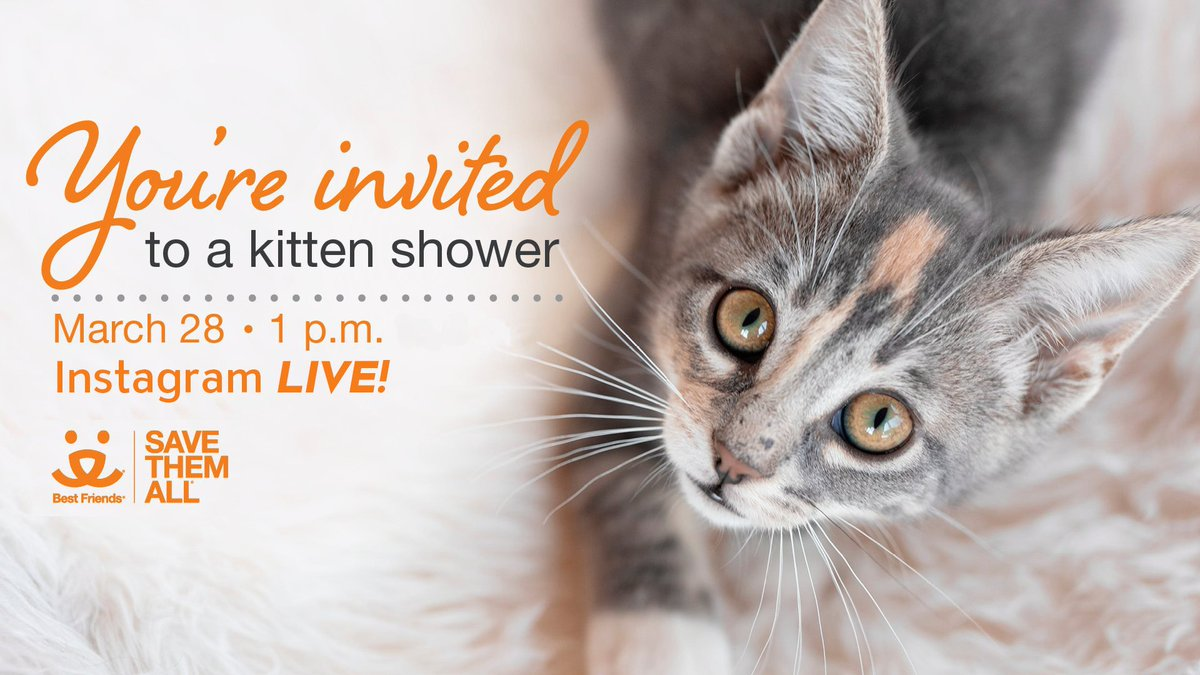Tune in March 28 at 1 p.m. PST on Instagram as we stream our very first virtual kitten shower LIVE!  We have special guests lined up including Kitten Lady AND @kroq's @KatCorbett will host a Q&A to make sure all your kitten care questions are answered!