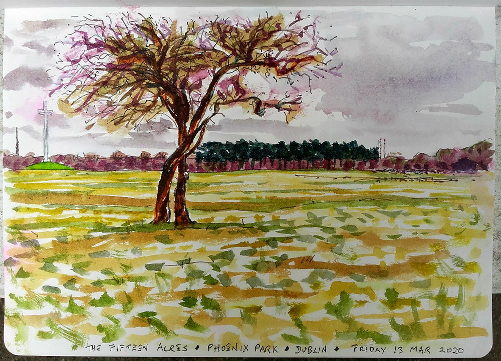 15 days ago, when days still just about had names, I blew a kiss to a funeral I couldn't attend because of the thing and on the way home stopped in the Fifteen Acres of the Phoenix Park, sat on the grass, and sketched a tree I've walked past and loved for fifty years