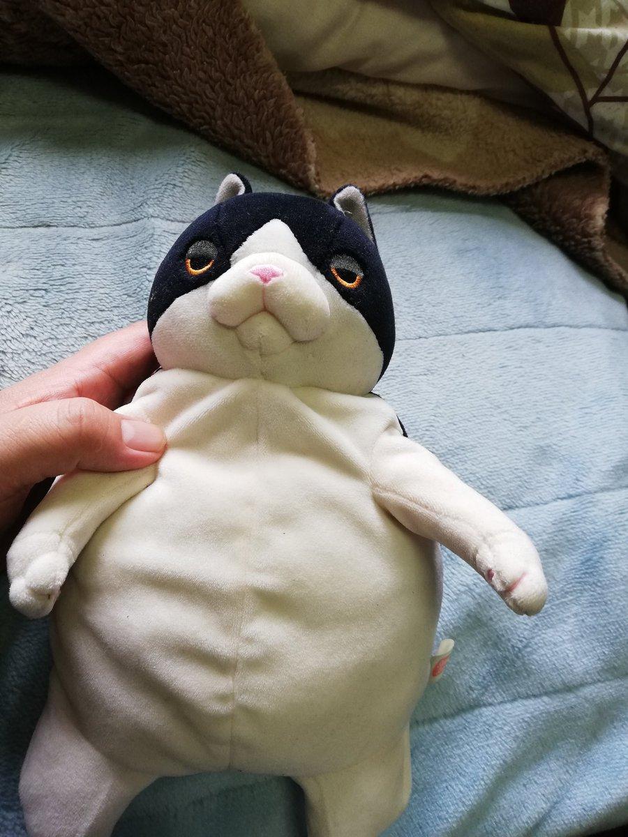 test ツイッターメディア - @kome_ys0000 なんだw てっきり我が家の飼い猫、高橋ダリルくんのお友達かと思ったwww https://t.co/HfXvMdnnWe