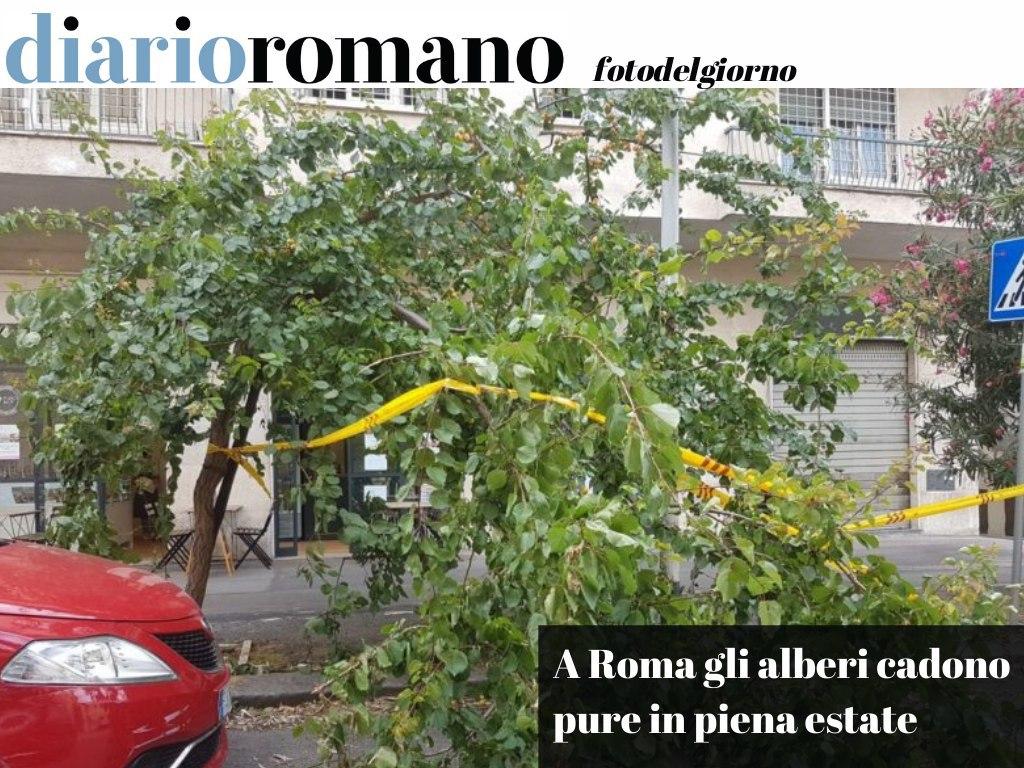 test Twitter Media - Se nessuno li pota, non serve il vento o la pioggia a farli precipitare al suolo. Dell'assessore Fiorini qualcuno ha notizie? . #Roma #foto #lettori 📸 https://t.co/EfVfYRigZv