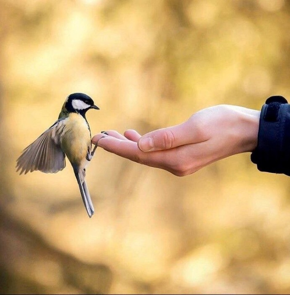 ❦When you meet another who loves all creatures great and small, you know you have a friend worth having. ~Anne Scottlin  #bird #love #animals #friend #small #kindness #smile #pic #anonymous