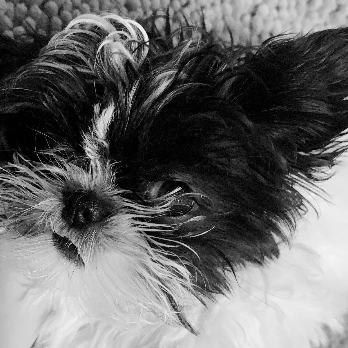 GiGi wanted a black & white portrait ❤️