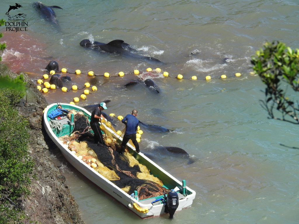 We are only weeks away from the start of the 2020/21 Taiji drive fishery season! Please take a moment to take action for dolphins in Japan at  #DolphinProject
