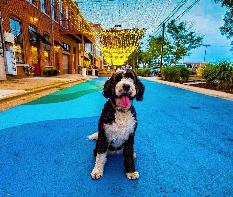 From campgrounds to boutique lodging, orchards to dog parks, and coffee shops to outdoor restaurants, there are so many pet-friendly and unique adventures in Kalamazoo!