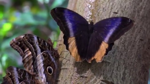 (1/3) Diagnosis: Missing our rainforest.  Prescription: 2 minutes with biologist Tim Wong, reporting in on the birds, butterflies, botanicals, frogs, & more. #MuseumFromHome