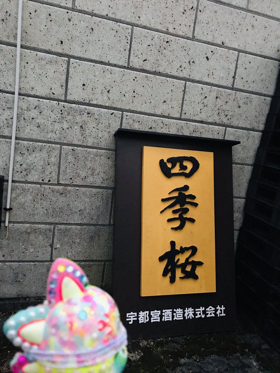 test ツイッターメディア - こんばんは🌆 #きぶなかま お知らせ担当です✨ 本日は、きぶなかま会議で「四季桜」や「黄ぶな」の日本酒を製造されている宇都宮酒造さんにお伺いしてきました。  黄ぶなのラベルをうっとりと眺めるキブナドンたち…🐟✨  #宇都宮 #黄ぶな #日本酒 https://t.co/uQx10bmvA8