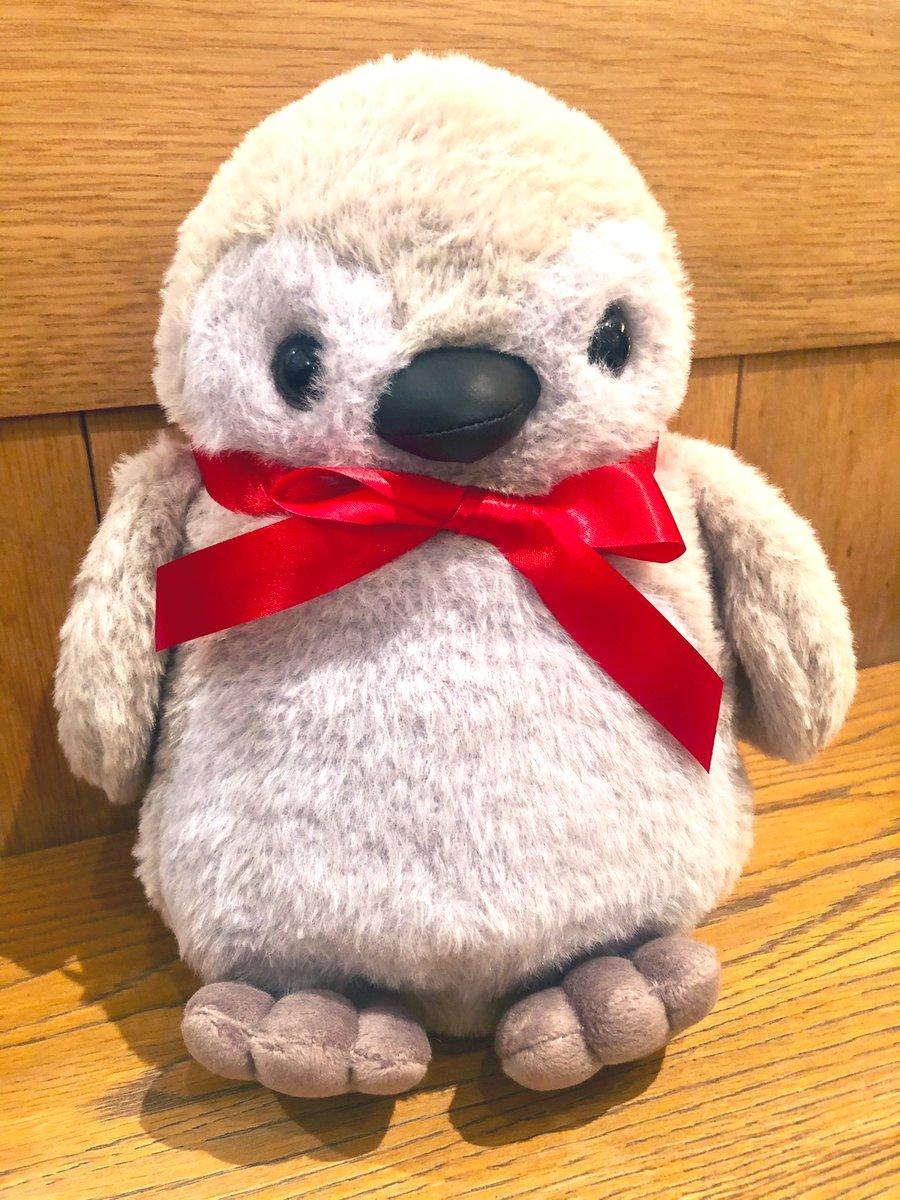 test ツイッターメディア - そろそろプロフィール写真を本人に変えるので、今のプロフィールのペンギンちゃん写真あげておきます🐧  すみだ水族館から連れて帰ったお気に入りの子です💓 https://t.co/NiKupaI7ej