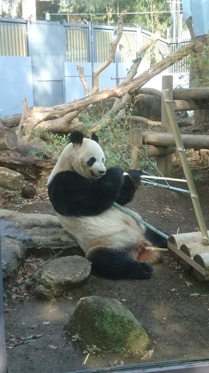 test ツイッターメディア - こんにちは😄昨日はリーリー&シンシンのお見合いが成功したのでは⁉️とお知らせが‼️またこんな可愛い子が産まれて、こんな親子のやり取りが見たいですね🎶  #リーリー #シンシン #シャンシャン #力力 #比力 #真真 #仙女 #香香 #xiangxiang #ジャイアントパンダ #panda #上野動物園 https://t.co/Z5JPfCGi2D
