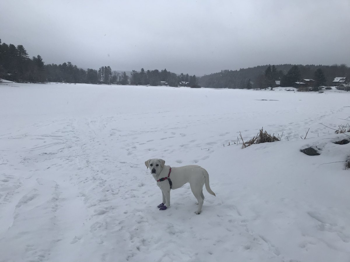 test Twitter Media - Lola at the lake, snowy morning https://t.co/3AVt9MFBNQ