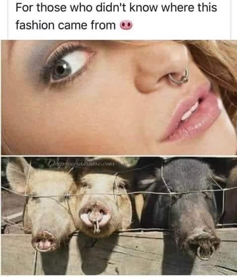 Nose rings have a purpose