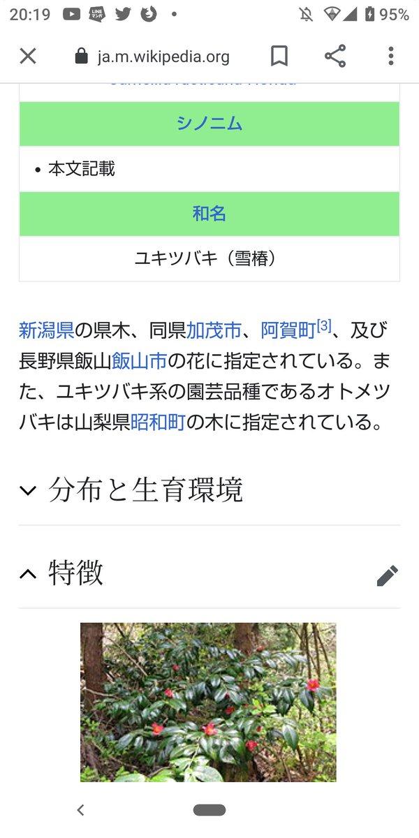 test ツイッターメディア - #2021酒の国にいがたの日  新潟県加茂市 雪椿酒造の 「越乃雪椿 越淡麗」  ちなみに雪椿とは新潟の県木である  何故 私のような無学な者が 如何にして好きでもない地元県の たかが木に執着するようになったのか  実は理由があります (uu〃)  それは… https://t.co/sqHmh7thwx