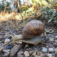 @snails_rule