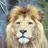 @pat_le_lion