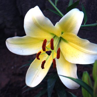 garden designer :-)   Social Profile