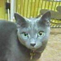 銀猫 | Social Profile