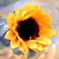 Sunflower | Social Profile