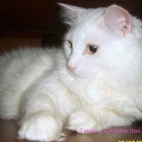 Татьяна_и_КОтята | Social Profile