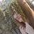 emm_gavrilova