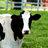 The profile image of farm_career