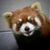 なべ3.0's Twitter Profile Picture